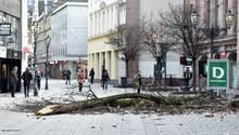 Ein abgebrochener Ast in der Düsseldorfer Innenstadt.