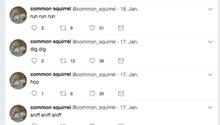 Der Twitter-Account des Bots @common_squirrel