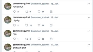 Der Twitter-Account des Bots @common_squirrel