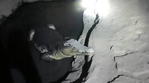 Krokodil Russland