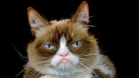Grumpy Cat, eine Katze mit permanent schlechtgelauntem Gesichtsausdruck