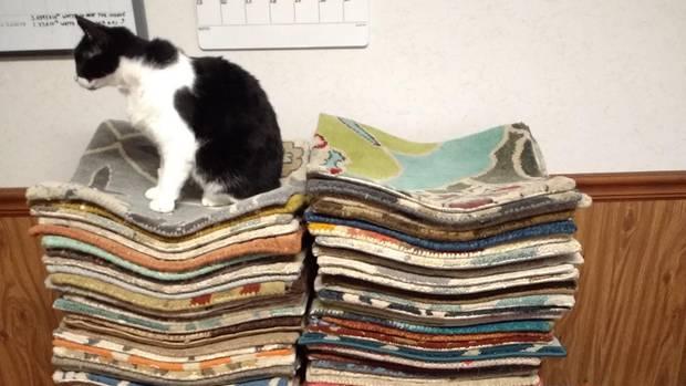 Eine Katze sitzt auf einem Stapel von Teppich-Proben