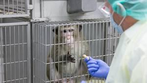 VW Affe Tierversuch