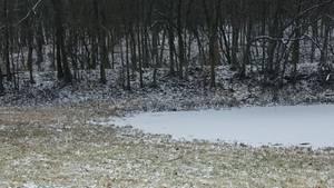 Auf einer reifüberzogenen Wiese mit einem zugefrorenen Teich und Bäumen im Hintergrund steht ein Husky