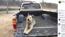 Anzeige bei Facebook: Hund des krebskranken Mannes auf der Ladefläche eines Jeeps