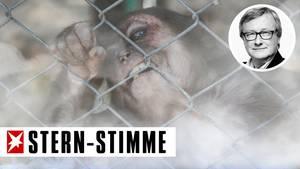 Ein Affe beist in den Maschndraht seines Käfigs, während Rauch die Sicht vernebelt