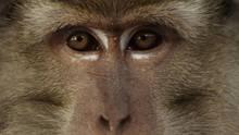 Die Augen eines Makaken: VW wollte Laborberichte über Affenversuche verheimlichen, weil Ergebnisse nicht git genug waren