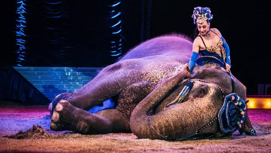 Umstrittene Tierhaltung: Im aktuellen stern: Wie Roncalli und Krone um die Zukunft des Zirkus kämpfen
