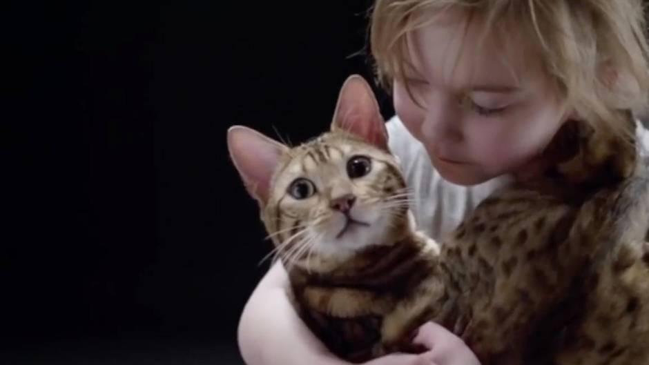 Zeichen der Zuneigung: Daran erkennen Sie, dass eine Katze Sie mag