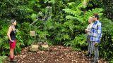 Dschungelcamp: Das Finale in Bildern – Jenny bei der Prüfung