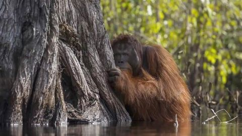 Boykott-Aufruf wegen Palmöl: Nutella ist nur der Anfang