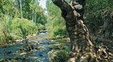 """Banias: Im schattigen Wald zu einem der Quellflüsse des Jordan  Ganz im Norden Israels entspringt der Banias, einer der Quellflüsse des Jordan, der auch """"Hermon River"""" genannt wird. Die Wanderung führt uns abwechslungsreich an den hier noch kristallklaren Wassern entlang bis zur Karstquelle """"Banias Spring"""". Bei meist angenehm kühlem Klima erleben wir einen der bedeutendsten Wasserfälle des Landes sowie eine Klamm, die man eher in den Alpen erwarten würde.  Dauer: 90 Minuten"""