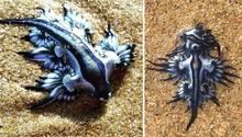 Ozeanschnecken