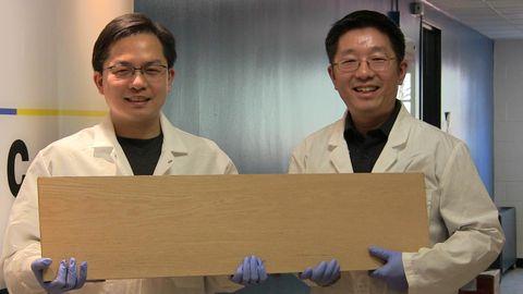 Nachwachsende Rohstoffe: Super-Holz – dieses Brett ist stärker als Stahl