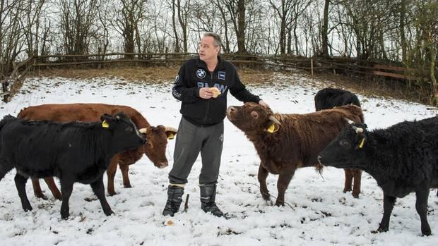 Michael verwöhnt seine Rinderherde mit Brötchen