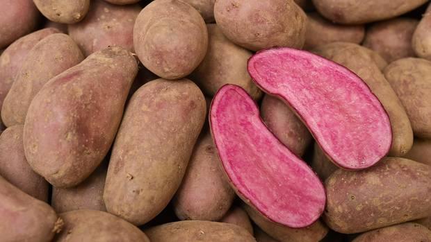 """Die """"Rote Emmalie"""" ist der aktuelle Shooting-Star unter den Kartoffeln"""