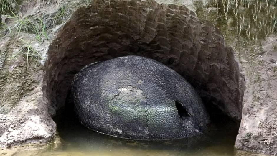 Fund in Argentinien: Dino-Nachwuchs? Forscher rätseln über gigantisches schwarzes Ei