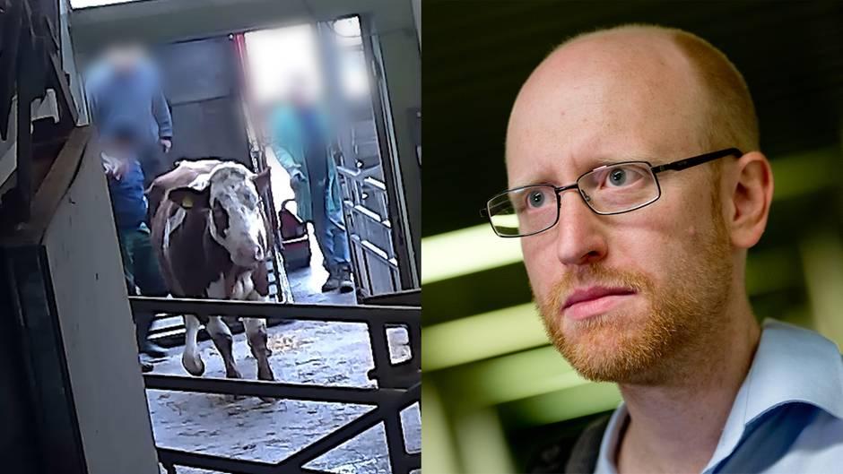 """Skandal im McDonald's-Schlachthof: Verdeckte Recherche als Tierschützer: """"Dafür hat man manchmal auch Blut an den Händen"""""""