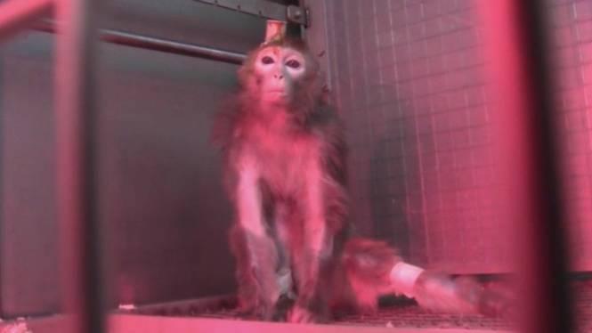 Strafbefehl gegen MPI-Mitarbeiter: Warum die Berichterstattung über Affen-Versuche am Max-Planck-Institut immer noch Folgen hat