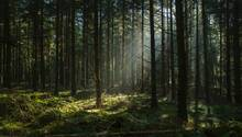Der Mann ernährte sich von Pflanzen aus dem Wald (Symbolbild)