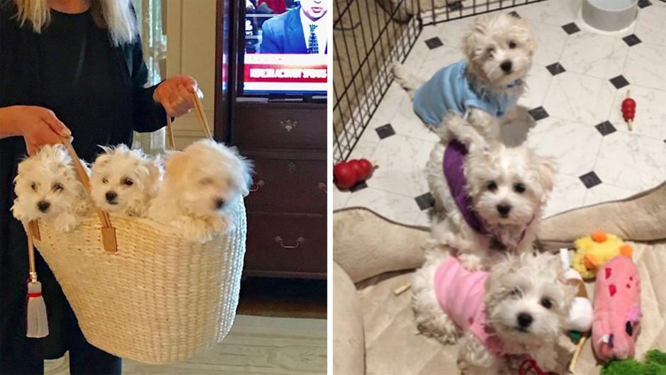 Hollywood-Legende: Barbra Streisand lies ihren Hund klonen - gleich zweimal