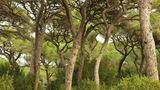 Maremma  Der Naturpark im Süden der Toskana lässt sich erwandern, am Fluss entlang, durch Pinienwälder, vorbei an Kühen, Schildkröten und Füchsen. Oder man verbringt den Tag an seinem wunderbaren Naturstrand Marina di Alberese. Der Blick schweift über das Tyrrhenische Meer hinüber zur Insel Elba.  Giuncola e Granaiolo: feines Agriturismo mit Vieh und Pool. DZ ab ca. 80 Euro, www.giuncola.it