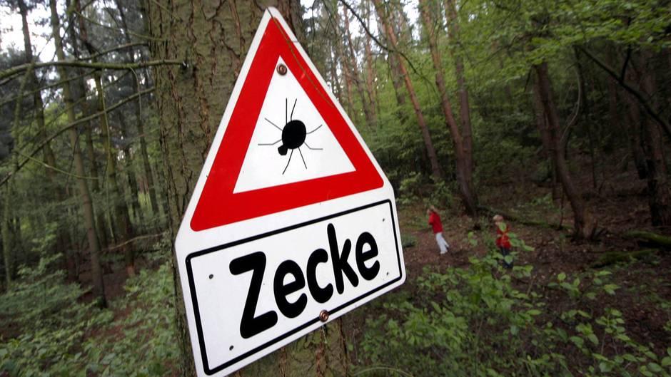 """Ein Warnschild mit der Aufschrift """"Zecke"""" hängt an einem Baum im Wald"""