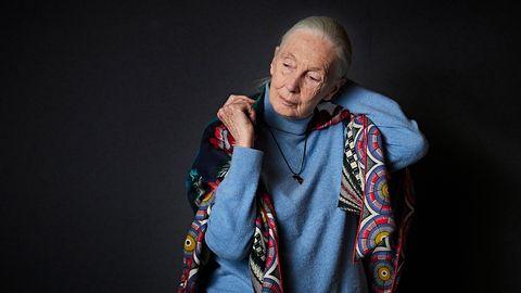 Verhaltensforschung: Jane Goodall - die Schimpansen-Mutter