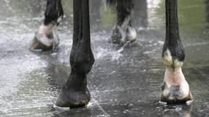 Ein Mann soll sich in NRW an einem Pferd vergangen haben (Symbolbild). Die Polizei ermittelt.