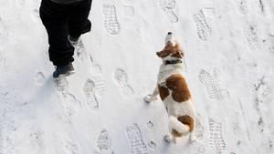 Ein Winterspaziergang endete für einen Hundehalter in Mecklenburg-Vorpommern tödlich