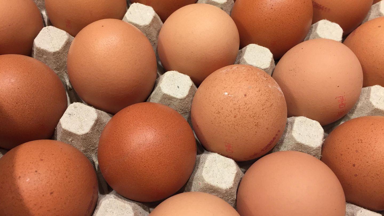 Eier  Nach Ablauf noch unbedenklich? Ja, noch ca. 2 Wochen Ausnahme: Für Tiramisu und andere Speisen mit rohen Eiern muss das MHD eingehalten werden.      Wie prüfen?  Augen:Wasserglas-Test  Nase:faulig  Mund:faserig (bei gekochten Eiern)      Was tun?Wasserglas-Test: Ei in ein Glas mit Wasser legen. Frische Eier bleiben unten. Richtet es sich auf, ist es etwas älter, aber noch genießbar. Schwimmt es oben, sollte es entsorgt werden. Eier, die kurz abgelaufen sind, zum Backen und Kochen verwenden, denn bei hohen Temperaturen werden Keime unschädlich gemacht. Spiegeleier beidseitig braten.      Tipp: So bleiben Eier länger frisch:In der Kühlschranktür oder Eierkarton lagern (möglichst unter 10°C). • Die Schale von rohen Eiern sollte nicht mit anderen Lebensmitteln in Kontakt kommen, da Salmonellenübertragung möglich. Gekochte Eier halten ca. 1–2 Wochen. Industriell bemalte Ostereier sind wegen eines Schutzlackes länger haltbar.