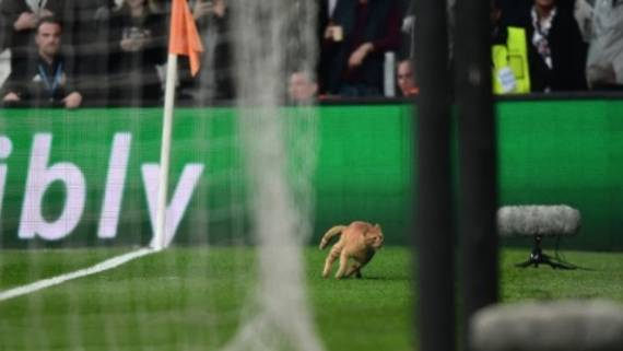 Bayern gegen Beskitas: Katze unterbricht Champions-League-Spiel: Das sagen die Spieler