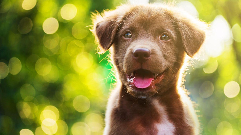 Ein süßer Hundewelpe in der Natur