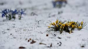 Auf dem Kalender beginnt heute offiziell der Frühling.