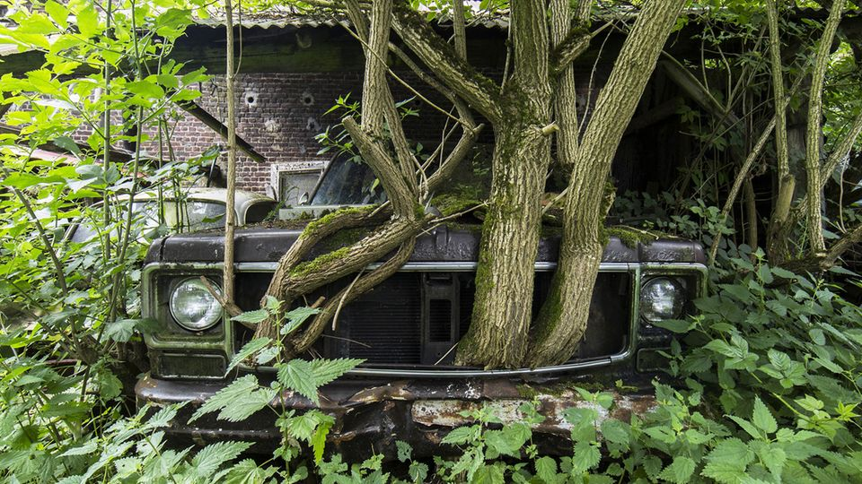 Vor Jahrzehnten eingeparkt: Aus dem Kühlergrill dieses Fahrzeugs wachsen inzwischen Bäume in den Himmel.