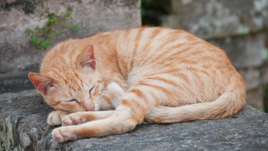 Eine orangefarbene Katze schläft auf einer Mauer
