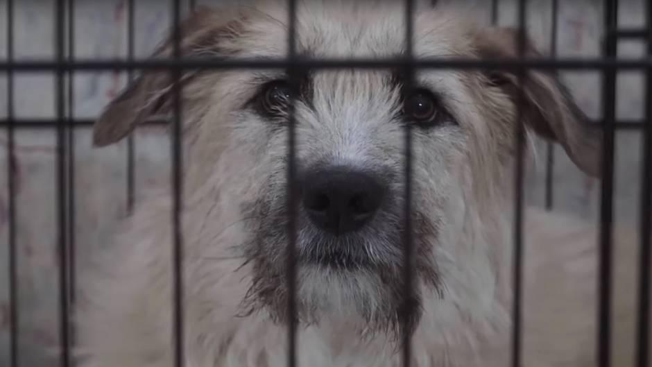 Russische Behörden machen Jagd auf ihre Straßenhunde