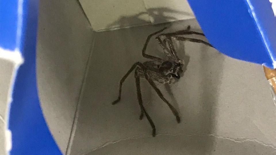 Nachrichten aus Deutschland: Spinne in München
