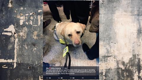 Ein Blindenhund sitzt sichtlich beängstigt in einer Londoner Bahn