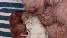 Ein Wellensittich liegt mit geschlossenen Augen auf dem Rücken zwischen Hundewelpen und unter der Schnauze einer Hündin
