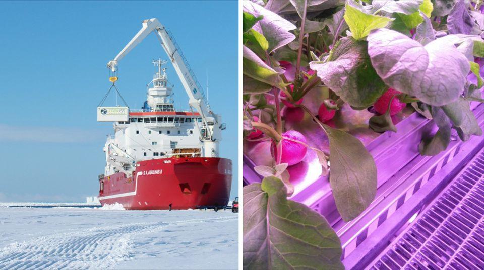 Antarktis Gemüse