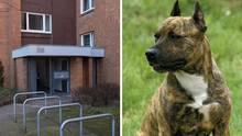 Das Haus der Toten in Hannover, ein Hund der Rasse Staffordshire-Terrier