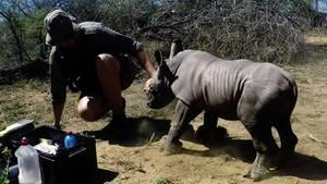 Nashorn beschützt seine Mutter
