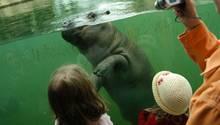 Familie vor Aquarium im Zoo, darin schwimmt ein Nilpferd