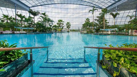 Über einem großen Schwimmbecken spannt sich ein Glasdach. Am Beckenrand stehen echte Palmen