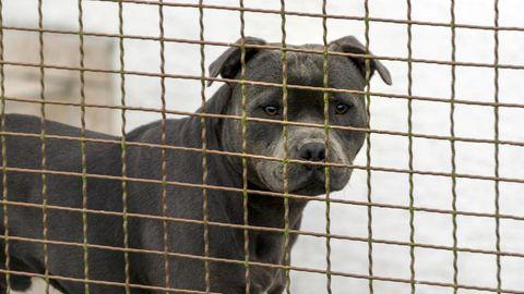 Tödliche Hundeangriffe in Deutschland: Treue Kameraden oder echte Gefahr? Deutschland diskutiert die Frage nach der Kampfhunde-Haltung