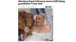 Alter Mann im Krankenhausbett, der die Pfote eines braunen Cocker Spaniels hält