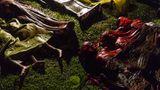 """Das Bild zeigt die Leichen von Rohingya-Flüchtlingen, nachdem ihr Boot, mit dem sie vonMyanmar nach Bangladesch flüchten wolten, gekentert war. Fotografen Patrick Brown gewann in derKategorie """"General News"""""""