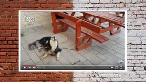 Hund in Israel identifiziert