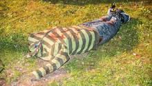 Eine kopflose Puppe in gestreiftem T-Shirt und Jeans gekleidet auf Gras - Die Puppe war Anlass für einen Polizei-Einsatz